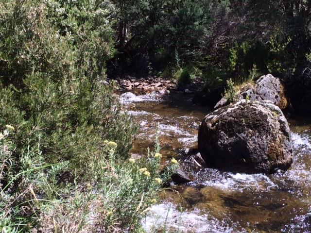 Bush on the edge of Thredbo River